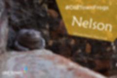 Nelson FB-01.jpg