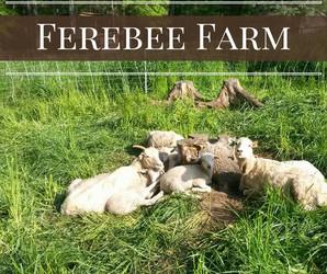 JC Ferebee