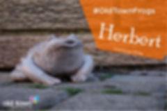 Herbert FB-01.jpg