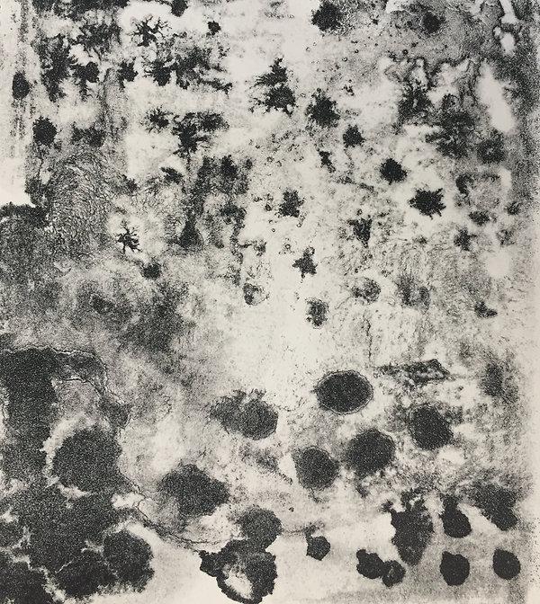 Microcultures lithographiques, papier arche 20x30cm