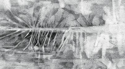 Branchage, graphite sur papier 25x12 cm