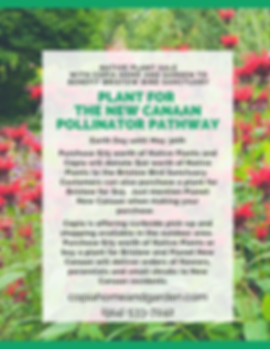 Native Plant sale to benefit bristow bir