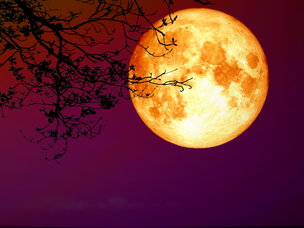 Rapid New Growth as something declines - Rohini Lunar Eclipse, November 30, 2020