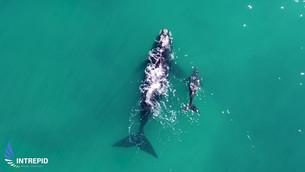 The Marine Fauna of Western Australia