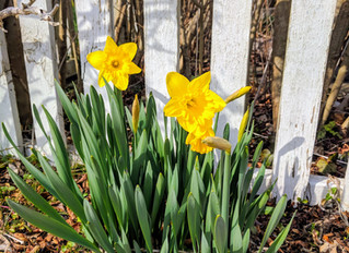 Daffodil Day Weekend 2018 Menu