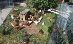 Ellas en el jardín