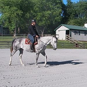 Yoga-Inspired Exercises for Horses