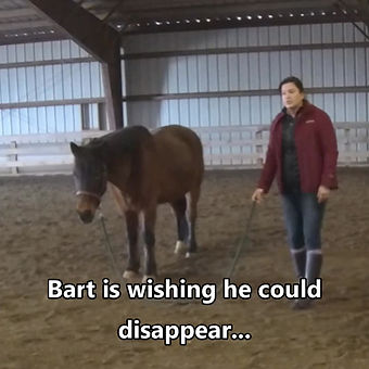 A demo I gave at the Rescue and Therapy Barn: Great and Small with one of their horses