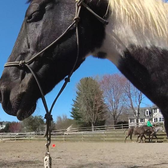 Horse-Training: A Sisyphean Task?