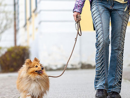 Is it Safe to Leave Your Dog with a Sitter?