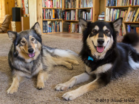 Dog Trainer Wars: Can't We Come Together?
