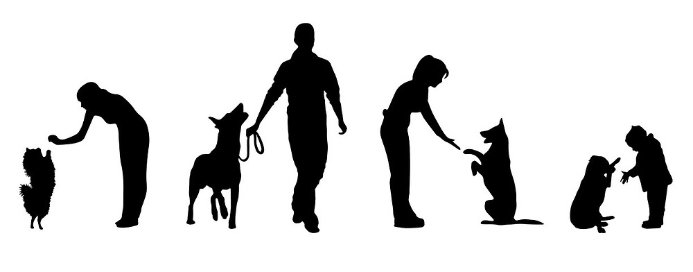 silhouette of people training dogs