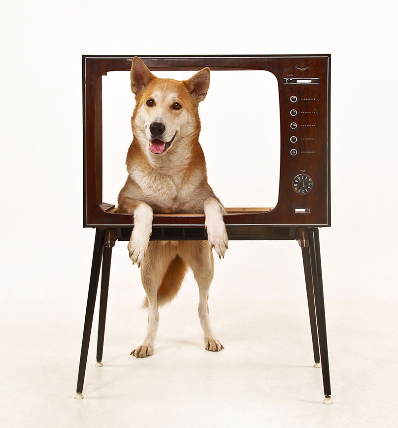 dog on television