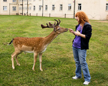 Deer taking food from woman's hand.