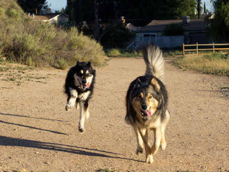 R-E-S-P-E-C-T Find out What it Means to Me—in Dog Training
