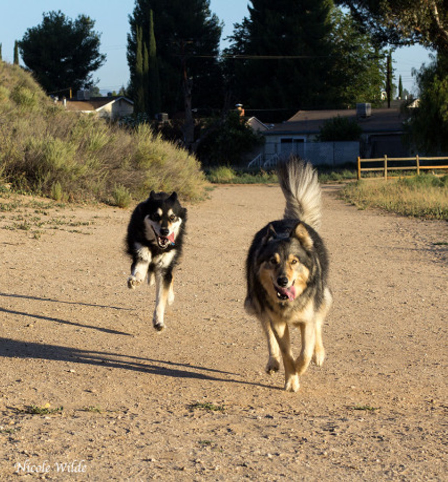 well trained dogs recall come to owner