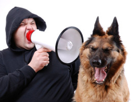 """What is """"No!"""" Really Telling Your Dog?"""