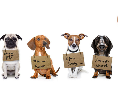 Disclosure in Dog Adoptions