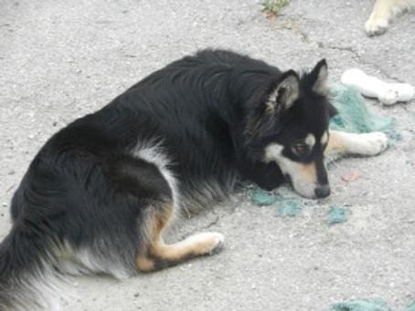 Do Dogs Feel Guilt?
