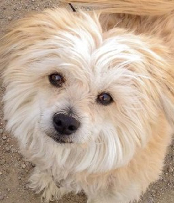 sweet small white dog looking up at camera