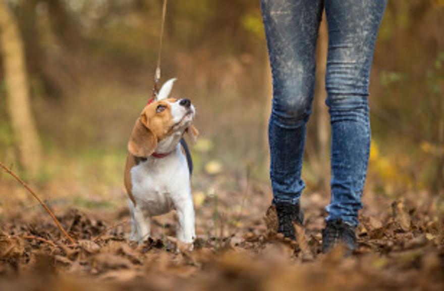 person walking dog on leash
