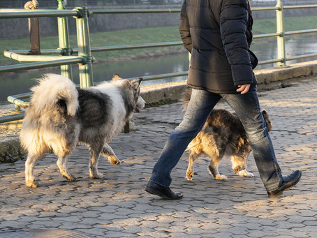 The Off-Leash Crowd: An Alternate Universe