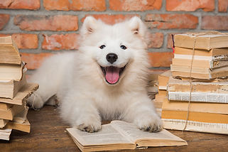 Shop samoyed with book smaller.jpg