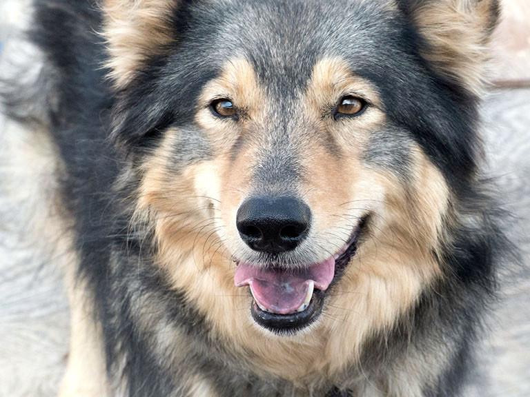 beautiful dog smiling