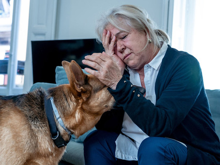 Is Your Dog's Behavior All Your Fault?