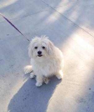 cute dog on leash