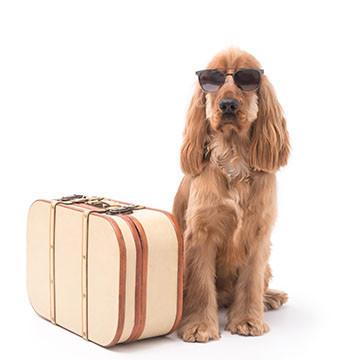 dog wearing sunglasses sitting next to suitcase