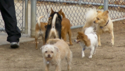 dogs at a dog park
