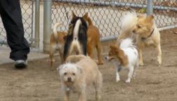 A Morning at the Dog Park