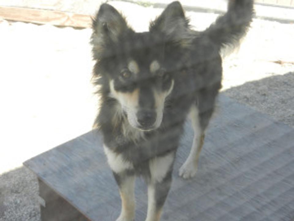 dog standing on dog house