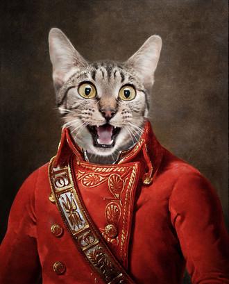 Redcoat cat