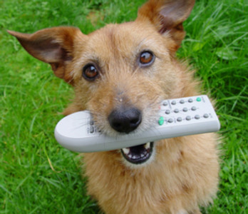 dog holding tv remote in mouth