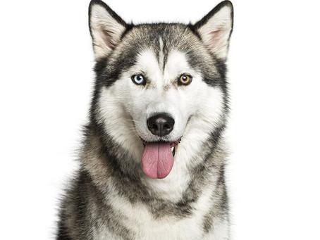Dogs: Training Versus Biology