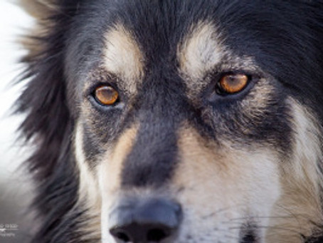 The Real Truth About Rescuing Dogs–and Wolves