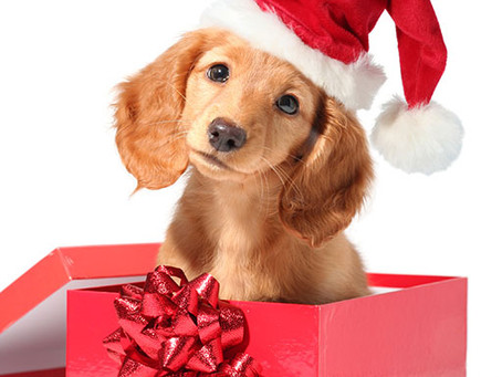 Thinking of Gifting Someone with a Christmas Puppy?