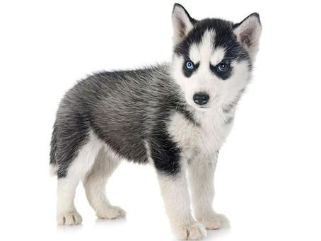 Killer Puppies?