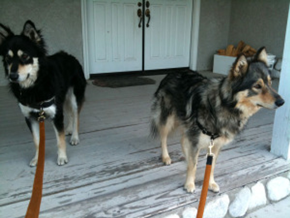 two dogs on porch waiting to go for a walk