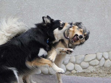 Is Your Dog's Play Too Rough?