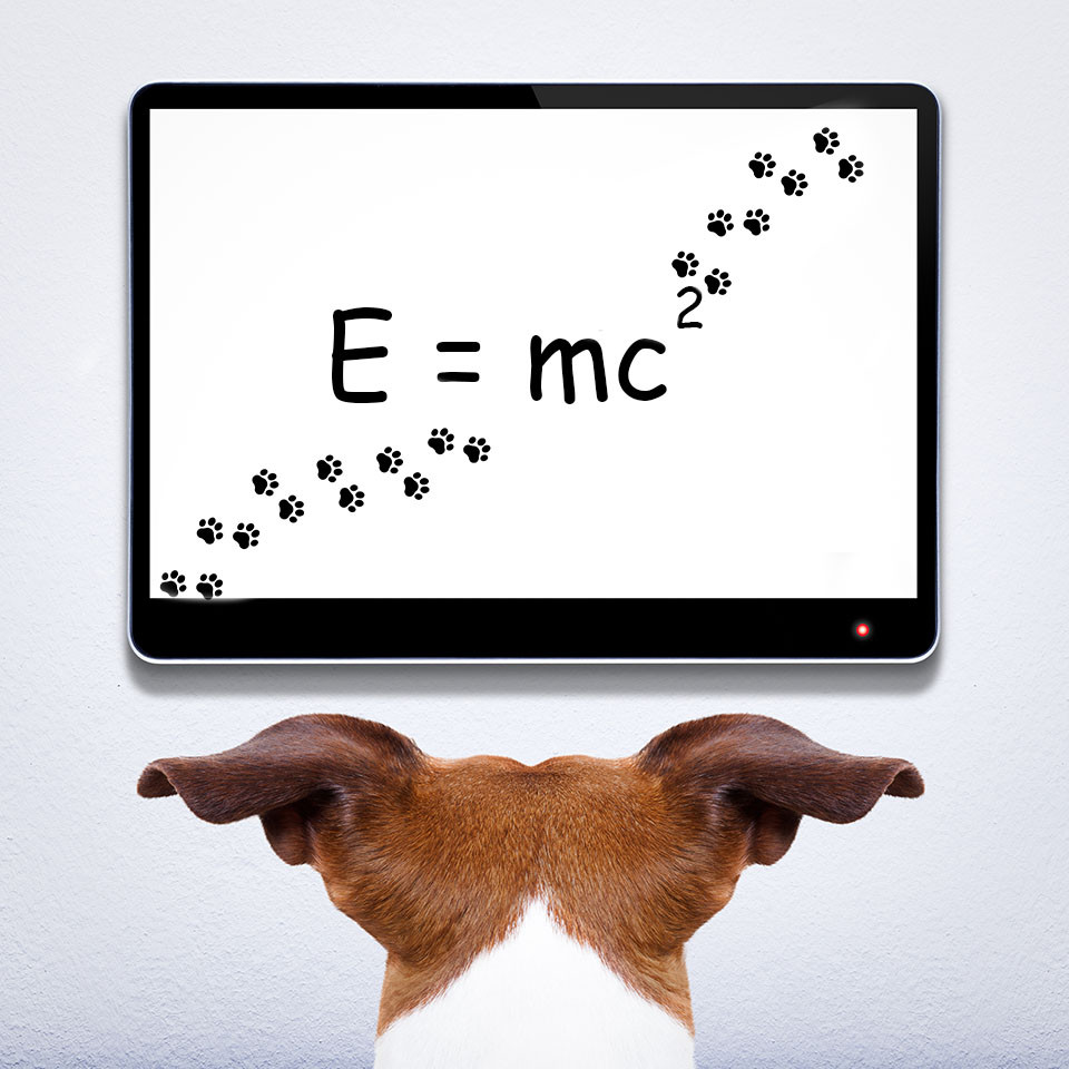 smart dog reading Einstein's equation on chalkboard