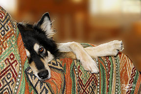 relaxed dog lazing on couch