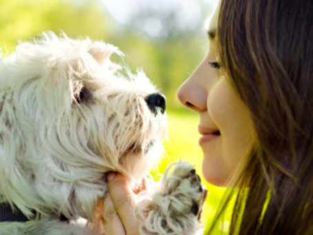 Can You Reinforce a Dog's Emotional State?