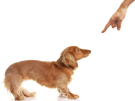Do Some Dogs Need a Heavier Hand?