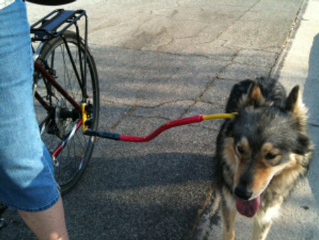 Product Review: Bike Tow Leash