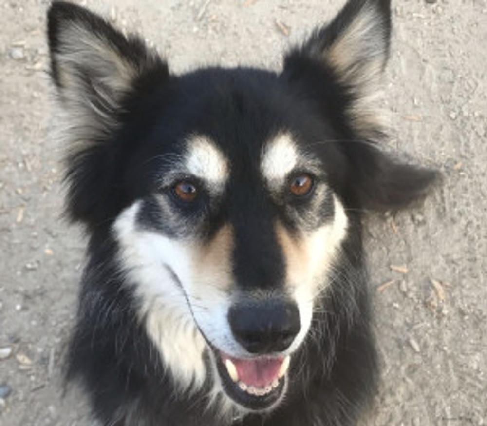 happy cute dog face looking up at camera