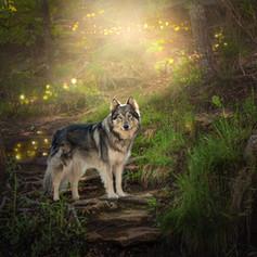 Sierra in enchanted forest.jpg