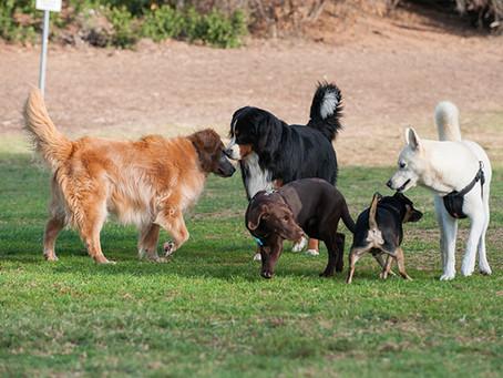 Dog Parks: Merriment or Mayhem?